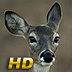 Hunt Call Pro HD for iPad